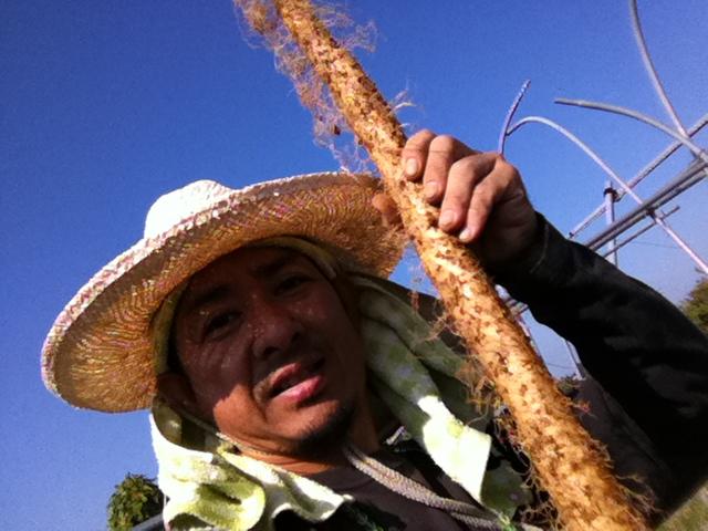 自然薯を掘り取った自然薯屋の奧山です。