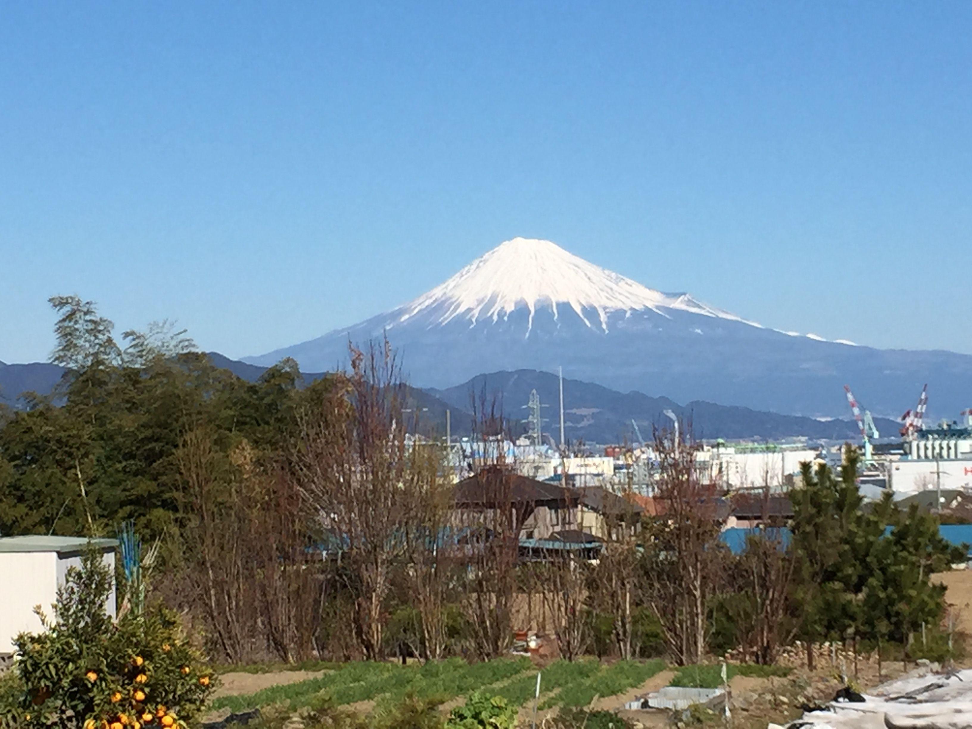自然薯屋の畑から見える富士山
